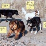 crazy beach dogs