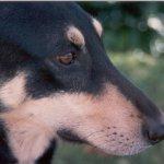 darbie close-up profile