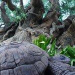 tree of life disney world 11